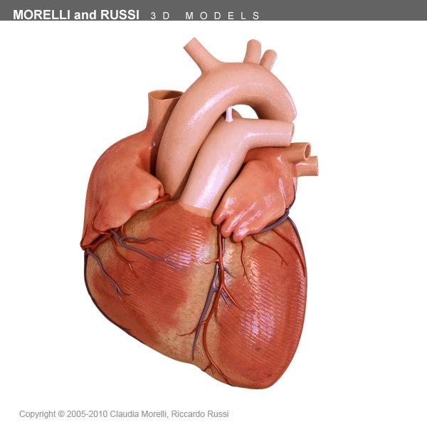 Human Heart 3d Models For Download Turbosquid
