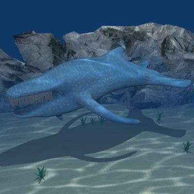 maya whale