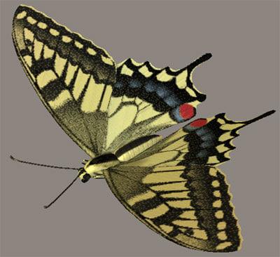 common yellow swallowtail kiageha 3d model