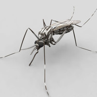 aedes aegypti mosquito 3d max