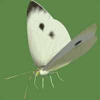 monsiro small white 3d model