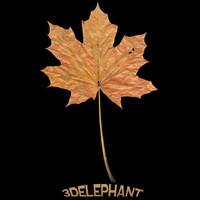 leaf lw