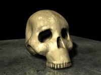 fossilized hominid skull 3d model