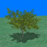 3d bush small tree model