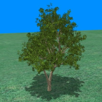 bush small tree 3d model