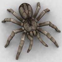 3d spider tarantula arachnid model
