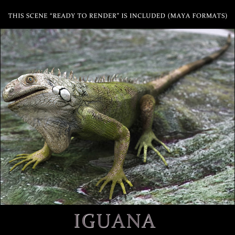 photorealistic iguana 3d model