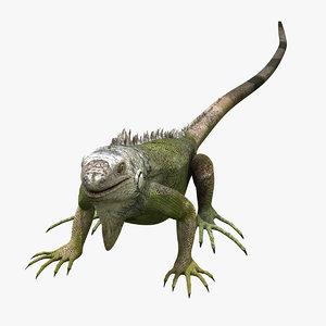 photorealistic iguana 3d model