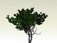 tree_3ds