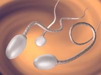 sperm.max