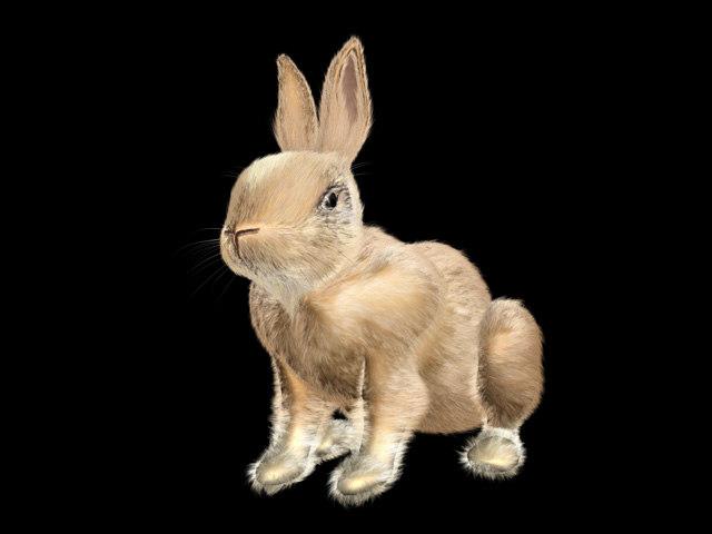 cute rabbit bunny easter 3d model