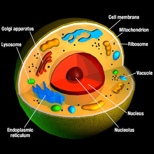 3d cell