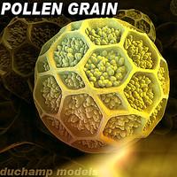 Pollen grain