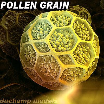 pollen grain 3d 3ds
