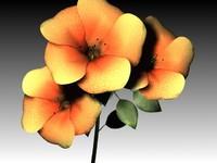flower max