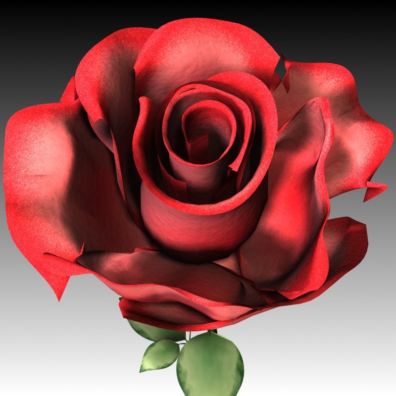 3D Other Rose Flower Wase