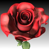 rose.zip