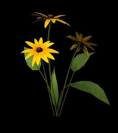 flower black eyed susan 3d ma