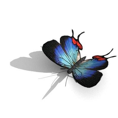 butterfly 3d obj