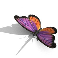 butterfly obj