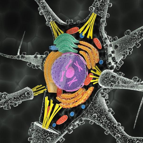3d model neuron cell