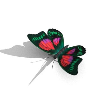 maya butterfly