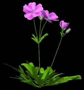 flower bloody cranesbill 3d model