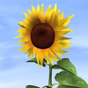 cinema4d sunflower blossom