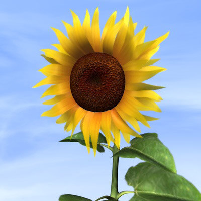 cinema4d sunflower blossom