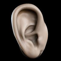 ear 3d max