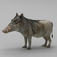Pig Hylochoerus