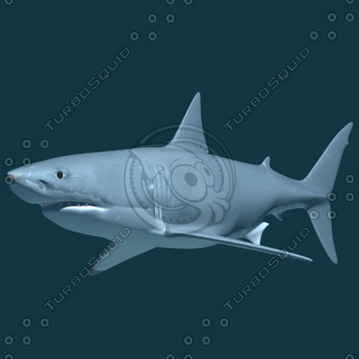 great white shark 3d dxf