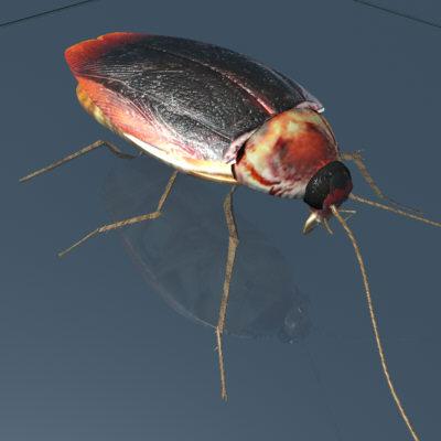 Cockroach (Maya)