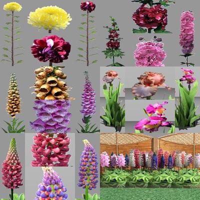 maya plants flower