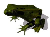 commonfrog.lwo
