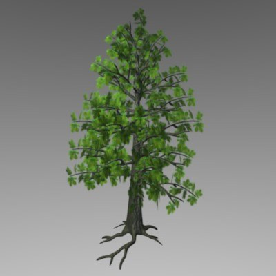 chestnut tree lwo