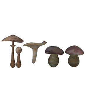 3d mushrooms boletus lactarius