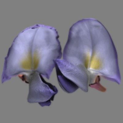 3d wisteria blossom