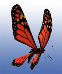 butterfly garden max