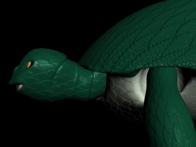 eastern box turtle 3d model