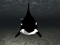 whale 3D.max