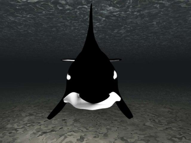 3d whale model