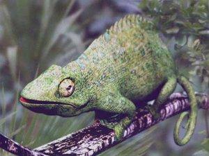 lightwave chameleon lizard