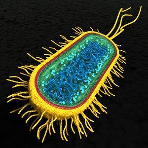 bacterial cell 3d model