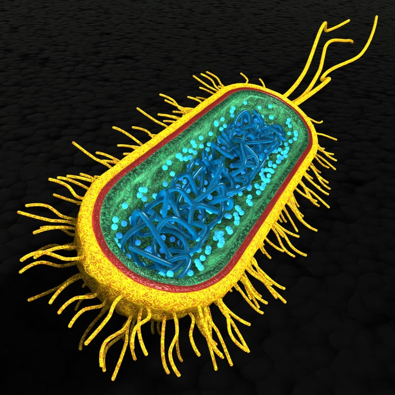 bacterial cell 3d model