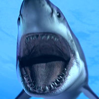 great white shark - 3d max