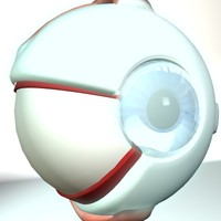 anatomy eyeball eye 3d model