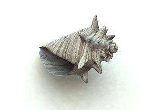 seashell sea shell 3d model