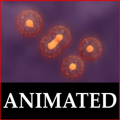 cell duplication 3d model