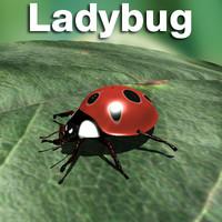 maya ladybug lady